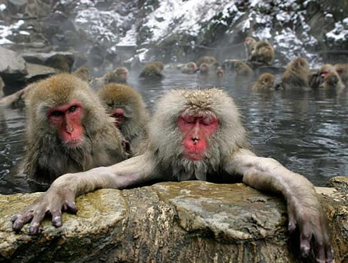 Monkey Hot Tubbing